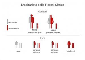 uno schema che spiega l'ereditarietà della fibrosi cistica